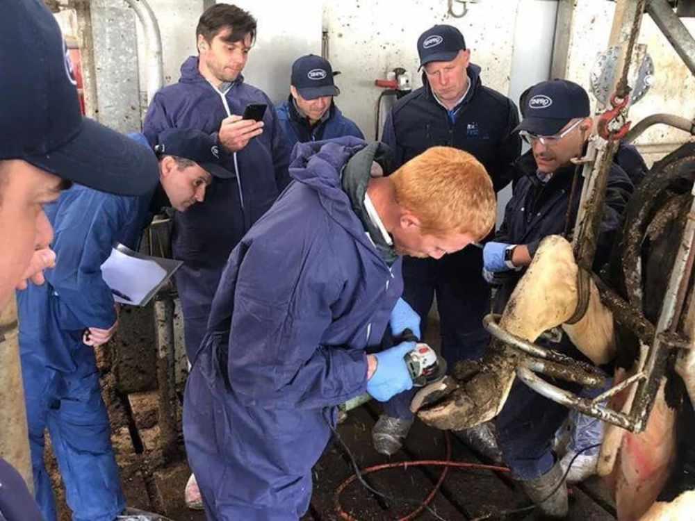 DairySmid Hoof Trmming International Training