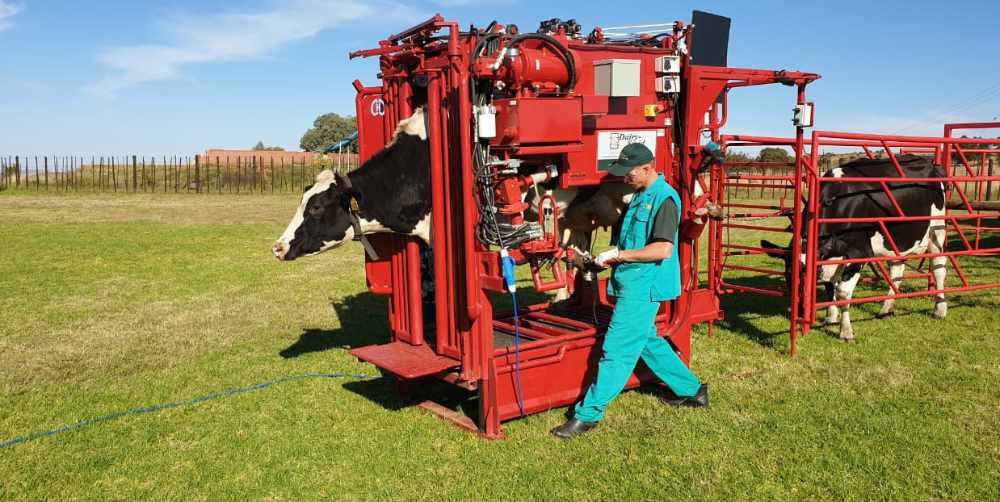 DairySmid Dairy Hoof Trmming