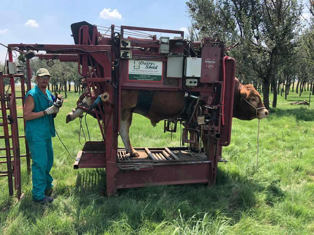DairySmid Hoof Trimming Beef
