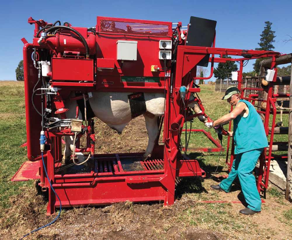 DairySmid Hoof Trimming - Focus on hoof care - Hydraulic hoof trimming chute
