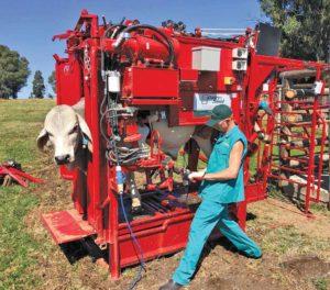 Hoof Triming DairySmid Basics of hoof health management in cattle